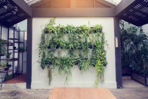 Conheça (x) dicas para elaborar a sua horta vertical de forma eficaz